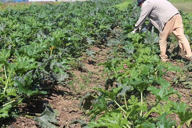 次世代の農業へ